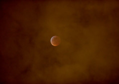 Overcast Wolf Blood Moon (james eugene frank) Tags: blood moon eclipse