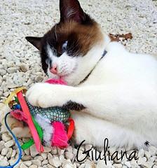 Roger <3 (° Giuliana *) Tags: cat cats gatto gatti flickr photo photography fotografia foto passion animal animals animali nautre natura canon