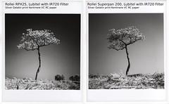 single tree comparison (Matt Jones (Krasang)) Tags: rollei rpx 25 superpan 200 infrared 720nm lubitel166b silver gelatin print comparison