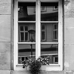 Window with faded Flowers thumbnail