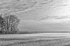 Exploring In Black And White (Alfred Grupstra) Tags: nature blackandwhite tree ruralscene outdoors landscape field meadow season grass scenics farm weather agriculture sky nonurbanscene nopeople backgrounds summer beautyinnature bregger400