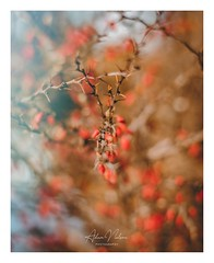1549392202852 (PhotoByNelson) Tags: nikon niagara ontario canada nature welland beautiful creative lightroom photoshop photography photo seasons winter d5600 bokeh