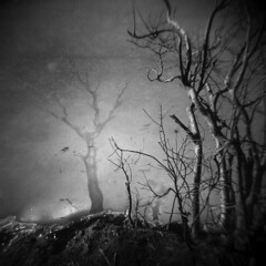 Silver Lake in Winter #42 (LowerDarnley) Tags: holga silverlake winter frozen lake ice branches shore saugus ma breakheartreservation