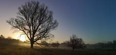 The tree (filippo rome) Tags: alba sunrise rome roma caffarella parcodellacaffarella nature natura landscape panorama lazio italy italia trees alberi fog nebbia