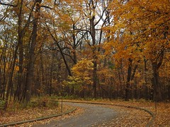 Dancing with the Wind (Anton Shomali - Thank you for over 1 million views) Tags: bussewoods woods dancingwiththewind picture taken busse forest nature preserve near chicago dancing with wind the leaves trees falling down theleavesonthetreesarefallingdown fall autumn path pikepath