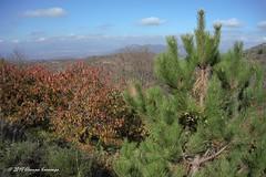 Ορεινή Αρκαδία Mountainous Arcadia (Eleanna Kounoupa) Tags: ελλάδα πελοπόννησοσ αρκαδία ανωδολιανά φύση βουνό φθινόπωρο greece peloponnese arkadia ano doliana nature mountain autumn δέντρα trees landscapes τοπία