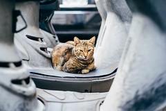 台中,貓的視界 (Eternal-Ray) Tags: 貓的視界 leica m10 & rf carl zeiss sonnar 50mm f15
