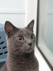 Cleo - 5 year old spayed female