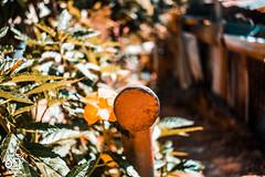 RHM-1 (RedHotMedia1) Tags: dibe road st james long circular mall trinidad diego martin pennywise tru value nazarene church car wash park agra court courts calcuta trini trees american stores baracks meadows