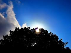 Contraluz (angelalonso57) Tags: orange canon powershot g1 x mark ii 125625mm ƒ160 125 mm 11250 200 sun sky capture light contraluz contrastes colores estrella