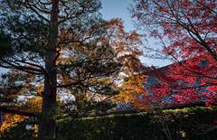 Fall Foliage (bacon.dumpling) Tags: arashiyama autumn fallfoliage fujifilmxpro2 fujinonxf16mmf14rwr japan koyo kyoto leafchangingseason tenryujitemplegarden