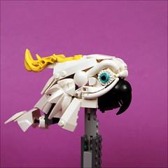 White Parrot (WIP) (timofey_tkachev) Tags: wip afol moc lego parrot bird