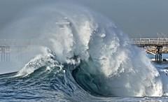 fullsizeoutput_51b0 (supercrans100) Tags: seal beach calif beaches back wash big waves surfing body bodyboarding skim boarding drop knee
