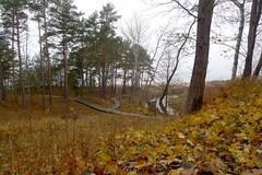 Holzweg (claudipr0) Tags: lettland baltikum latvia strand ostsee sea forest wald kiefern balticsea birken birch pinetrees saulkrasti