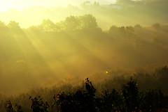 Filari foschi 2 Langhe 18 (zanf89) Tags: neive alba langhe piemonte colline vino barolo nocciole