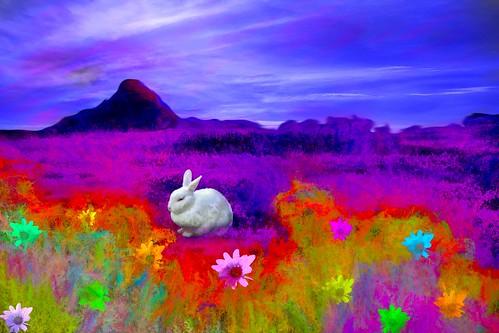 Colorful Wilderness Scene