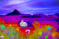 Colorful Wilderness Scene (Rusty Russ) Tags: rabbit bunny sky flowers colour wilderness rework colorful day digital window flickr country bright happy eos scenic america world sunset beach water red nature blue white tree green art light sun cloud park landscape summer city yellow people old new photoshop google bing yahoo stumbleupon getty national geographic creative composite manipulation hue pinterest blog twitter comons wiki pixel artistic topaz filter on1 sunshine image reddit tinder russ seidel facebook
