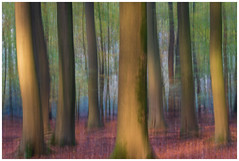 Forest of dancing trees in movement (Rob Schop) Tags: icm speulderbos veluwe sony55210oss sonya6000 le forest movement pola hoyaprofilters handhold autumn holland herfst trees bomen bos