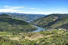 Le Douro (Yasur.sur.Flickr) Tags: porto douro portugal fleuve river vigne vignes vine vines vin vins wine wines paysage landscape nature culture cépage collines colline escarpement escarpements hill hills escarpment grape grapes raisins raisin d750 nikon yasur
