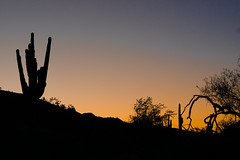 Scottsdale, Arizona 12-30-18 (benakersphoto) Tags: az arizona sunrise sun colors color colours colour colourful colorful orange blue sky silhouette desert landscape landscapephotography nature natur natural naturephotography naturaleza cielo 50mm flickr outside sony sonyalpha mirrorless a6000 ciel day dawn cactus