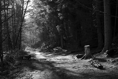 WoodlandWalk (Tony Tooth) Tags: nikon d7100 nikkor 35mm f18g bw blackandwhite monochrome woods woodland path track pathway fernilee derbyshire