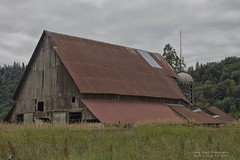 Oakville barn (Eric S Olsen) Tags: washington washingtonstate graysharborcounty pacificnorthwest barn trees field clouds summer rust rural