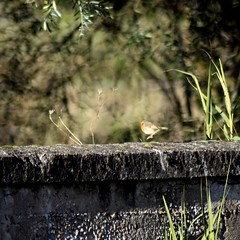 ops (pasqualetassone) Tags: animali nature