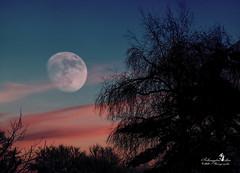 Mond - Romantik (Schneeglöckchen-Photographie) Tags: moon mond sunset sonnenuntergang