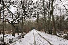 """Walking in a wintry wood (kerwitcherwoo) Tags: """"surrey hills"""" snow winter """"thursley national nature reserve"""" surrey aonb woodland trees paths uk england countryside white"""