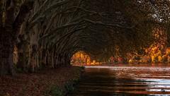 ...weg der bäume (st.weber71) Tags: nikon nrw natur deutschland d850 germany see essen wasser wasserspiegelung outdoor ruhrgebiet bäume gewässer romantik ufer wellen nikonflickrtrophy