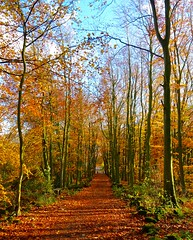 Stafford Castle (Ugborough Exile) Tags: staffordshire stafford midlands england uk sony rx100iv 2018 trees treesdiestandingup