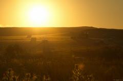Baling Sunset, Flamborough (EmPhoto.) Tags: baling haybaling harvest sunset flamborough eastyorkshire uk emmiejgee landscapepassion flare discarded sonya7rm2 sooc unedited