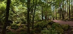 Irlande - Killarney - vers Torc Waterfall (AlCapitol) Tags: irlande kerry nikon d810 killarney torcwaterfall forêt