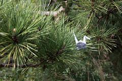 Paper Crane and Pine (Errai 21) Tags: ツルと松  origami ツル 折り紙 折り鶴 おりがみ papercrane 花 flower 花写真 flowerphoto origamiphoto 花が好き pine 松 マツ  paper crane