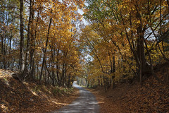 Sinking Creek Road (Notley Hawkins) Tags: httpwwwnotleyhawkinscom notleyhawkinsphotography notley notleyhawkins 10thavenue fall leaves woods columbiamissouri boonecountymissouri road tree forest gravelroad wood rural october 2018 canontse24mmf35lii sinkingcreekroad landscape outdoors