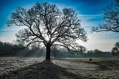 Tree of life (Paul Wrights Reserved) Tags: sheep tree light sunrays landscape landscapes landscapephotography leadinglines