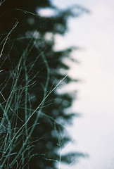 no title (biancarosa.looman) Tags: analog handheld reflection tree canon kodakfilm arnhem