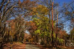 Our Street_4607 (smack53) Tags: smack53 fall fallseason fallcolors foliage autumn autumnseason autumncolors westmilford newjersey nikon d100 nikond100 trees autumnal
