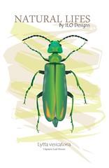 Lytta vesicatoria (ILO CG ART) Tags: illustration ilustración animal animals insect insectos naturaleza nature wildlife drawing graphicdesign diseñográfico cgart cgi spain españa fauna ilodesigns