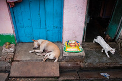 The dog and the cat (SaumalyaGhosh.com) Tags: dog cat door closed open kolkata india street streetphotography xt2 fuji fujifilm life
