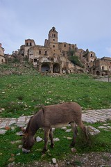 IMGP3448 Donkey in Craco (Claudio e Lucia Images around the world) Tags: craco basilicata abandoned ruins frana ghost ghosttown rovine pentax pentaxk3ii sigma sigma1020 sigmaart pentaxart terremoto smottamento abbandonato erba paesaggio antico cielo asino donkey horse equino mulo mule animale