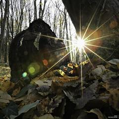 La jante (Un jour en France) Tags: coucherdesoleil forêt jante arbre feuille automne hautsdefrance leshautsdefrance carré square canonef1635mmf28liiusm canoneos6dmarkii