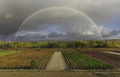 Magia (Rafael Díez) Tags: españa larioja hormilleja paisaje panorámica viñas otoño filtro polarizador rafaeldíez color verde arboles