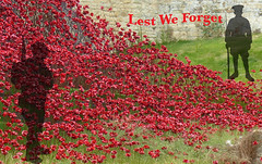 WW1 100 years tribute. Explore. (Jane Desforges) Tags: poppies ww1 soldiers remembered tribute