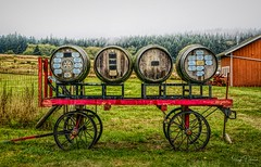 Whidbey-Westside Rotary Club - Greenbank Farm (SonjaPetersonPh♡tography) Tags: barrels club island whidbeywestside whidbeywestsiderotaryclub rotaryclub farm antique vintage cart wagon mist fog rain whidbeyisland washington washingtonstate stateofwashington greenbank greenbankfarm circa1904 nikon nikond5300 events barns greenbankstore redbarns captainthomascoupe greenbankcheese shops galleries store restaurant homestead whidbeypiescafe winetastingshop trails birdwatching heritagebuildings historicbuildings heritageregisteredproperty