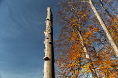 Fall Tower (L I C H T B I L D E R) Tags: sky cologne köln park tree autumn herbst fall tower november stamm trunk