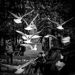 Les mouettes du jardin des Tuileries (Guillaume Birraux) Tags: tuileries mouettes paris france jardin oiseau blackandwhite streetphotography street photography black white nikon