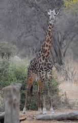 _DSC8939 (acomb) Tags: tanzania roadtrip ruaha tandala