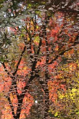 Reflection of Autumn Color (seiji2012) Tags: 六義園 紅葉 モミジ 反射 秋 foliage tokyo rikugien garden reflection autumn happyplanet