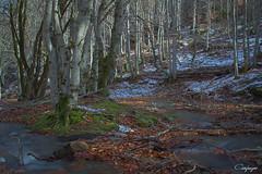 Sedas sobre el Hayedo... (cienfuegos84) Tags: otoño autunm hayedo tejera negra guadalajara cantalojas nieve rio river snow